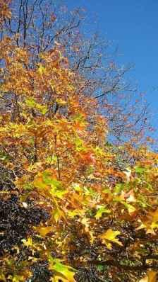 foglie autunnali e cielo azzurro