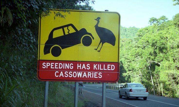 800px-Road_sign_-Cairns,_Queensland,_Australia-26Oct2007